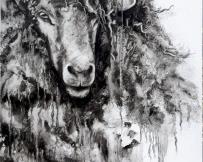 Alice Locoge - Tableaux : Animaux habitant  du  larzac